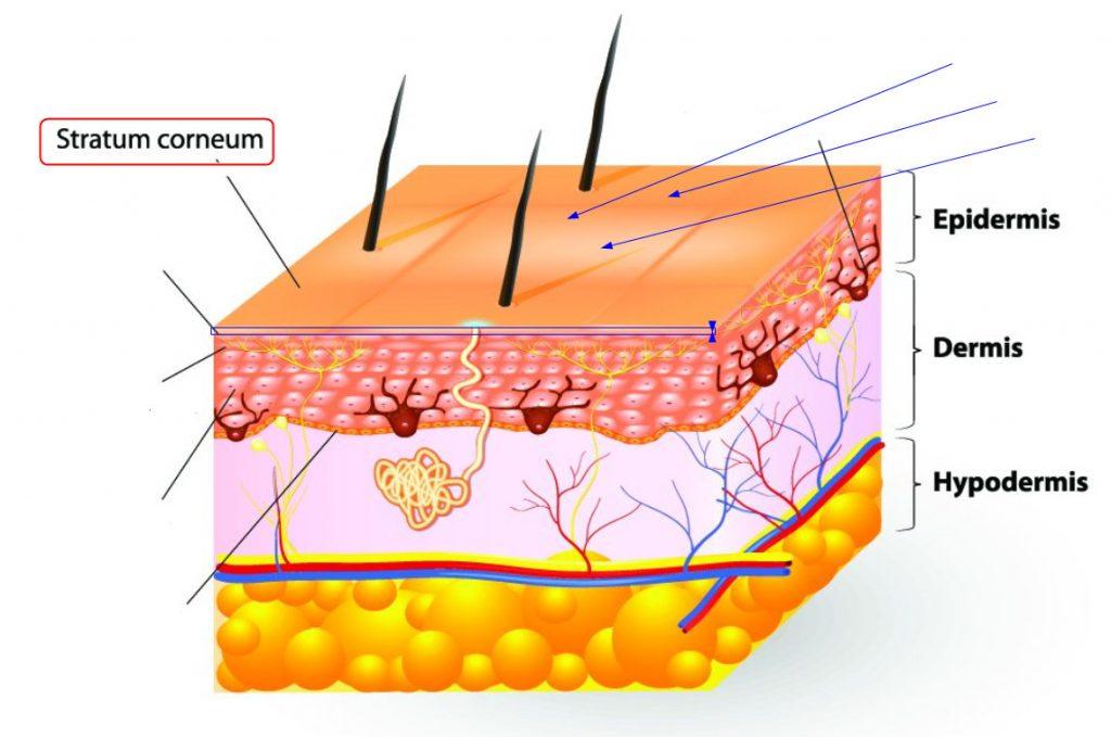 میکرودرم لایه سطحی پوست