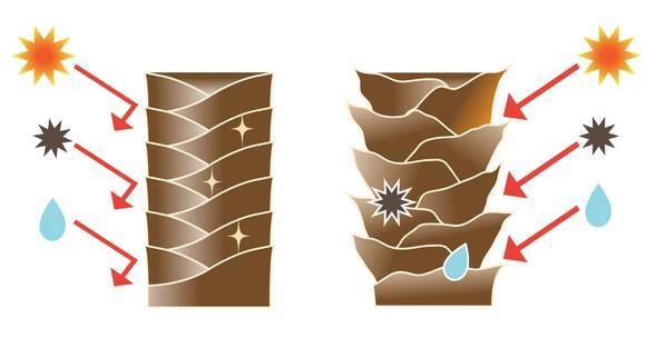 تفاوت کوتیکول موی سالم با کوتیکول مو آسیب دیده